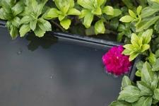 Foto af bassin