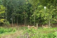 Brændestabel i skovbrynet