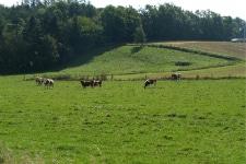 Foto af landskabet ved Hedebostien