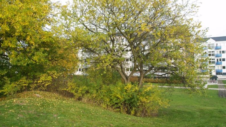 Drift og vedligehold af grønne arealer i Baldersbo Afd. 12, Ballerup