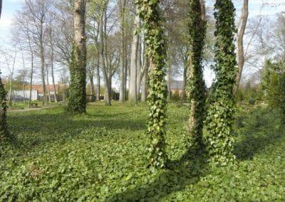 Dragør Kirkegård, udviklingsplan