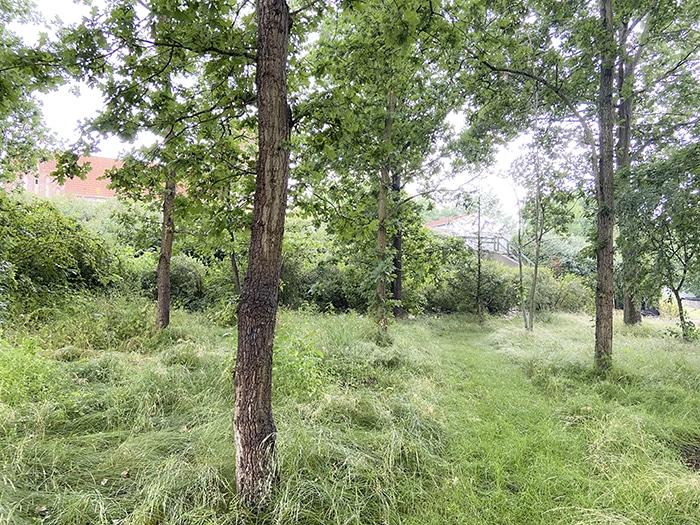 Viskinge Kirkegård, foto